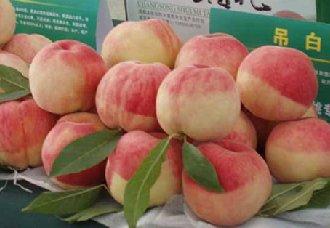 水蜜桃一斤多少钱?