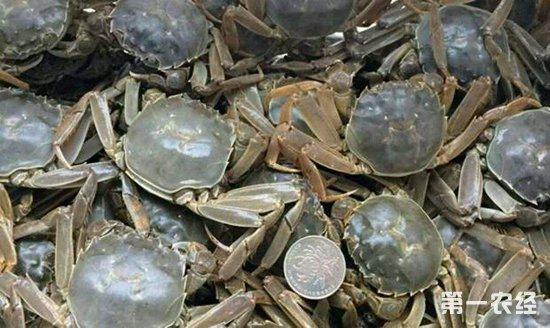 9月28日国内河蟹批发收购价格整体下跌