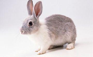 <b>兔子腹泻要如何防治?防治时有什么要点?</b>