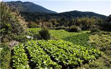 私人订制农产品 让消费者买的放心农户卖的舒心