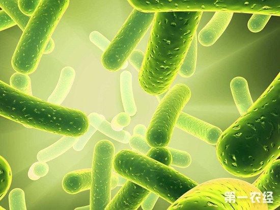 益生菌不仅无益反而有害?食品专家释疑解惑