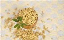 <b>东北大豆产量上升 国产大豆价格首次低于美国大豆</b>