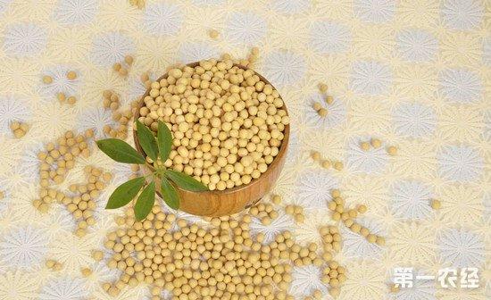 东北大豆产量上升 国产大豆价格首次低于美国大豆