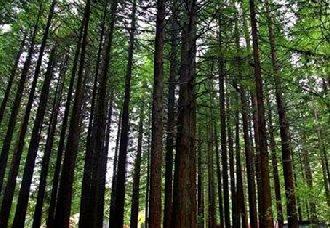 <b>江西:加大对森林资源破坏的督查力度</b>
