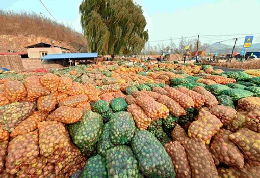 滞销水果频出倒掉烂掉情况,果农为何不通过电商卖掉?