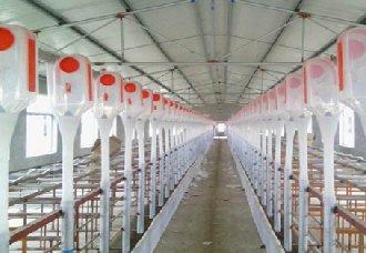 养猪场中的饮水设备要怎么设置?猪场饮水设备设置注意事项