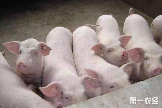 重庆发生两起生猪O型口蹄疫疫情