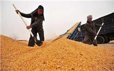 吉林省预备200亿元资金 确保秋粮收购资金充足