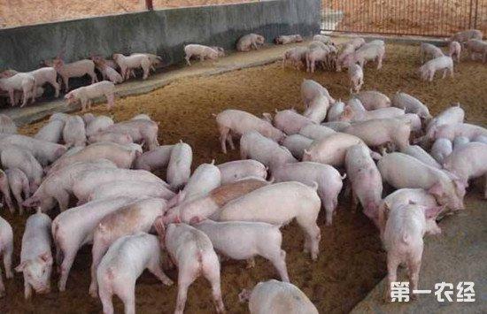 新进仔猪一定要注意这些问题 减少应激反应