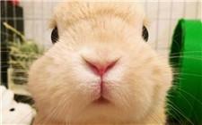 兔子也会中暑 该如何防治?