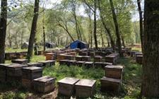2018年养蜂行业境况如何?蜂农:42度成熟蜜也只能拿来喂中蜂