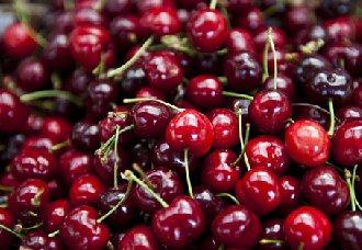 樱桃常见的虫害以及防治措施