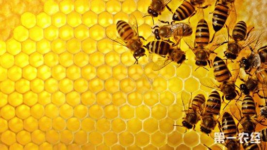 """贵州三联村:蜜蜂助脱贫,养出""""甜蜜路"""""""