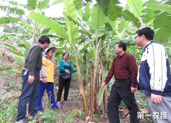 六年减少贫困人口704万 广西省扶贫成绩斐然
