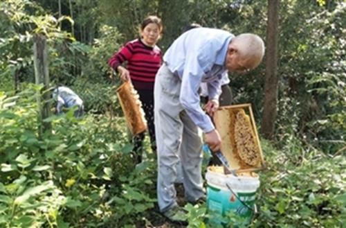 湖北咸宁:76岁老农山中养蜂 蜂蜜丰产却遭遇滞销