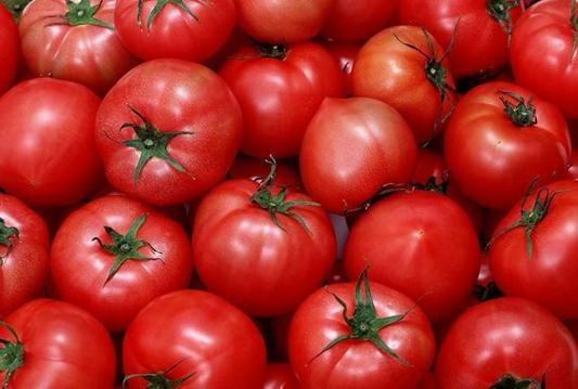 西红柿产业让村民日子越过越红火