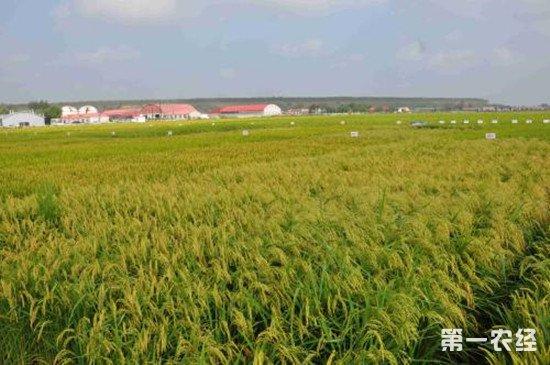 农村土地开放要有底线 保障农民安身之地