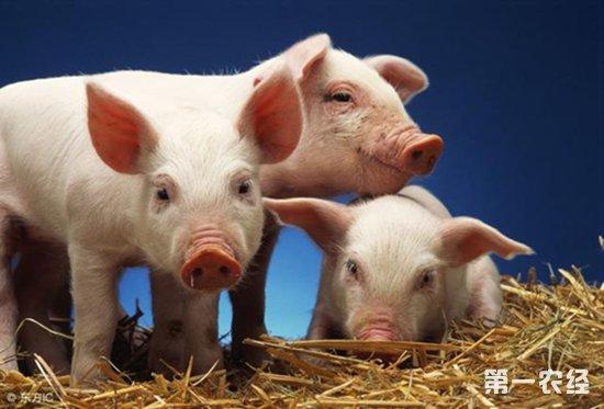 辽宁省营口市爆发全国第24起非洲猪瘟疫情