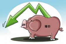 猪价总体仍处于周期性下跌通道 11-12月份价格可能有所回升