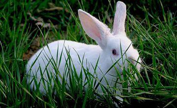 獭兔常见的疾病有哪些?要怎么去防治?