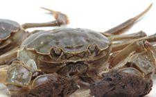大闸蟹要如何去养殖?大闸蟹的养殖技术介绍