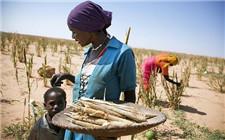 中国举办非洲国家农业研修班 5个非洲国家官员参加