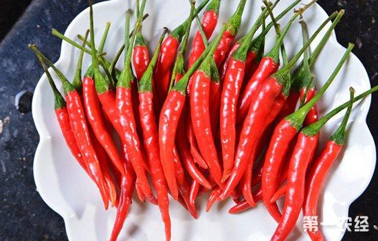 新疆:色素辣椒长势喜人,农民口袋越来越鼓