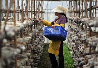 无锡:切实提升现代农业科技创新水平