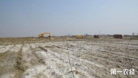 盐碱地已可实现当年改良、当年种植、当年高产