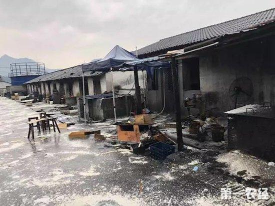 非洲猪瘟疫情:浙江省乐清市疫区解除封锁