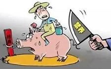 养猪场要是遭遇禁养关停,养殖户该如何维权?
