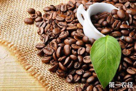 咖啡豆要怎么种?咖啡豆的种植技术