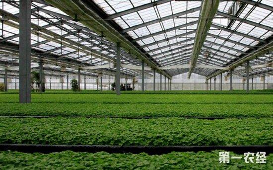 温室自动控制系统可实现远程管理