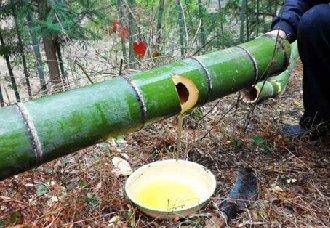 何运行:扎进深山酿竹酒,让家乡更美、乡亲更富