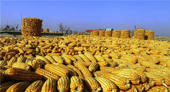 订单农业解决农民后顾之忧 收入提高农民笑开怀