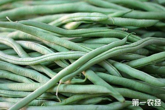青岛食药监局发布风险提示 谨防菜豆中毒