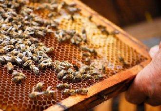 蜜蜂蜂巢怎么消毒?蜜蜂蜂巢的消毒技术