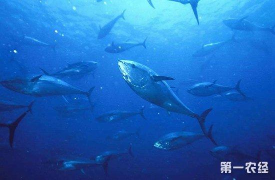 壁纸 海底 海底世界 海洋馆 水族馆 桌面 550_361