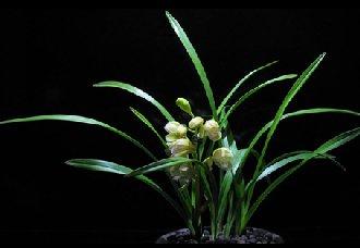 兰草要怎么种?兰草的种植技术