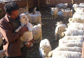 广西五龙村:羊产业成促农增收的主导产业
