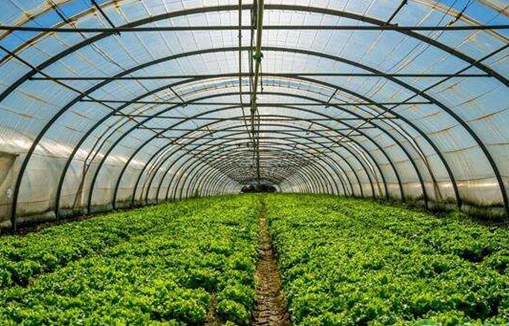 <b>大棚蔬菜技术助脱贫,扶贫对象致富奔小康</b>