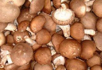 云南:食用菌成脱贫致富的好项目