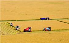 黑龙江省发展优质稻米 制定优质水稻标准