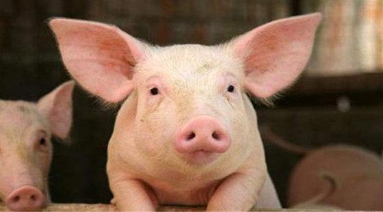 生猪价格趋于稳定,从哪些方面可看出?