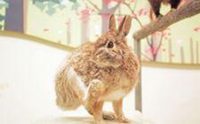 <b>野兔要怎么人工养殖?野兔人工养殖技术分享</b>