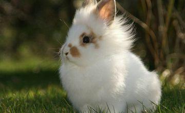 <b>兔弓形虫病症状是怎么样的?要怎么去防治?</b>
