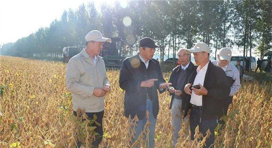我国再研发高产大豆品种 平均亩产320公斤