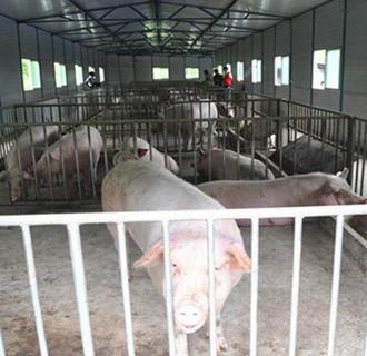 我国辽宁省锦州、盘锦市再次出现非洲猪瘟疫情 共3起