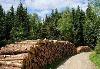 <b>广西:全面实施乡村振兴战略林业行动</b>