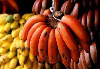<b>红香蕉一斤多少钱?</b>